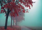 消失在雾霭记忆里的你们